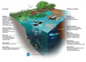 BP Deepwater Spill